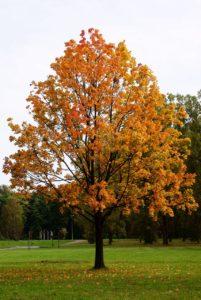 Chant de l'automne (Cycle Le Corps sonore) – Les samedi 9 et dimanche 10 novembre 2019